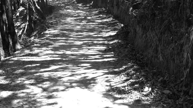 Step by step the journey unfolds itself until it reaches its destination. The road of light and shadow is also the road of life. The traveller takes back many memories with him and these bring him back again and again.