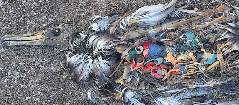 bird-killed-by-plastic