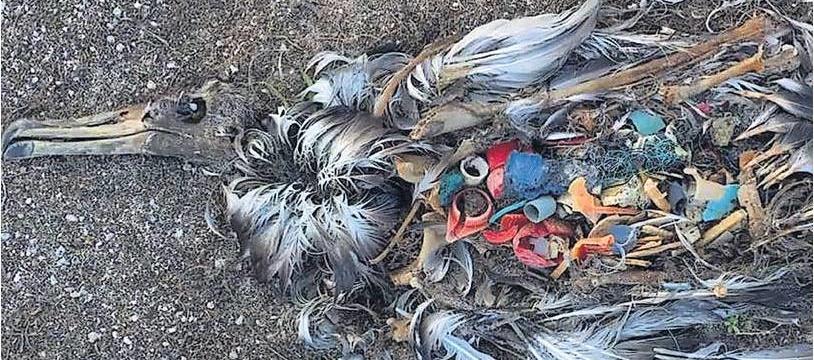 bird-killed-by-plastic
