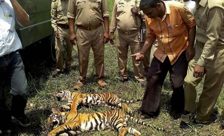 man animal conflicts in india Thus began the gruesome meets of man and beast, in many forest regions of india : better known as man-animal conflicts throughout the history of the planet, man has hunted animals and vice-versa but, both of them were tied by the natural limits and balance.