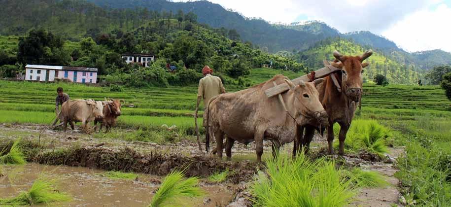 UTTARAKHAND FARMERS AGRICULTURE LOSS