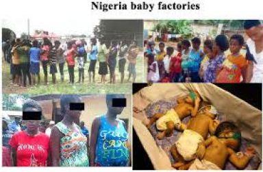 Nigeria baby factory